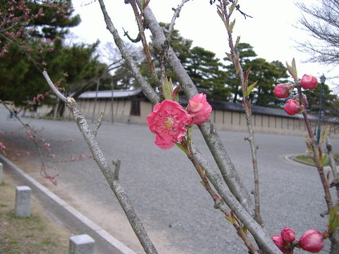 2006_03260024